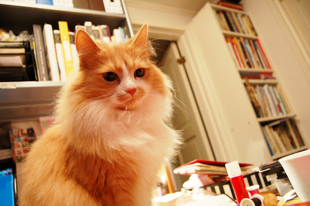 Smilla the cat on my work desk, photo by iHanna