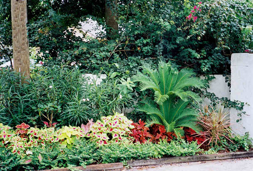 Tampa landscape design tidy tropical entrance garden for Tropical garden design