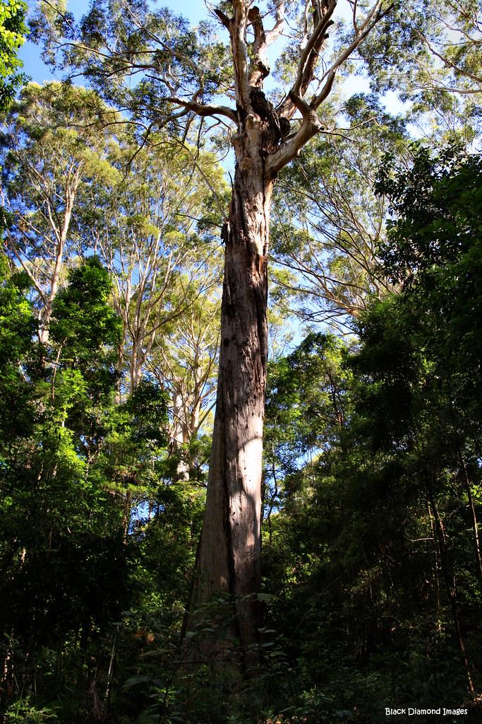 tree no 1  u0026 39 the bird tree u0026 39