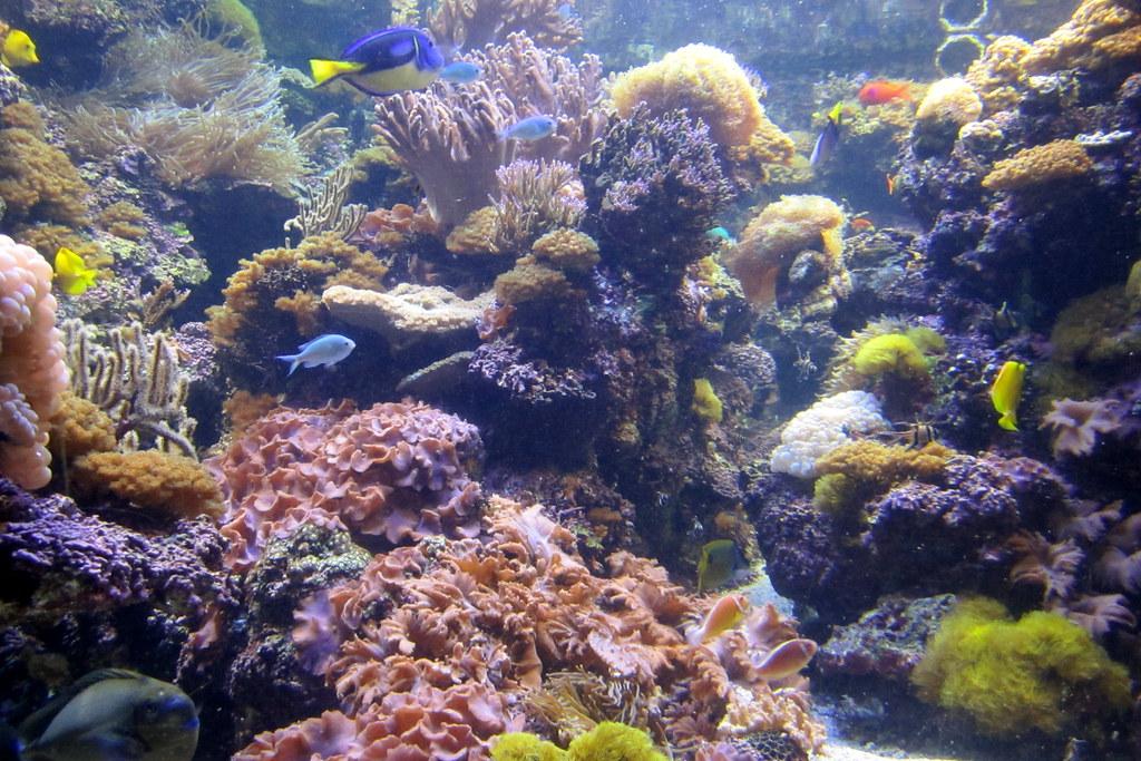 Aquarium Direction In Living Room