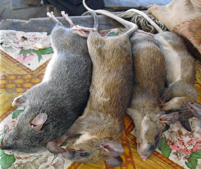 Good Rat Food Recipe