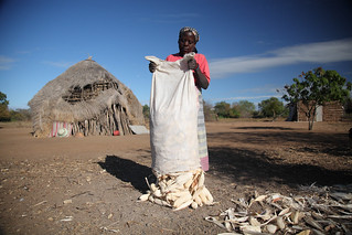 Smallholder maize farmer in southern Mozambique | by International Livestock Research Institute