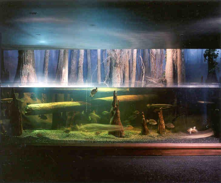 South Carolina >> Blackwater Swamp at South Carolina Aquarium | All rights res… | Flickr