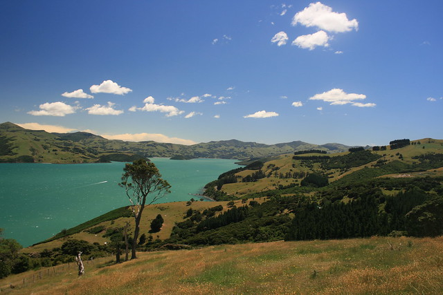 Banks Peninsula New Zealand  City pictures : ... Reserve Walk Banks Peninsula, New Zealand | Flickr Photo Sharing