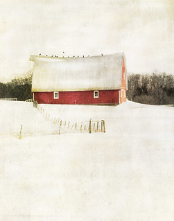 milk and berries... | by jamie heiden