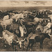 Texas Long Horns.