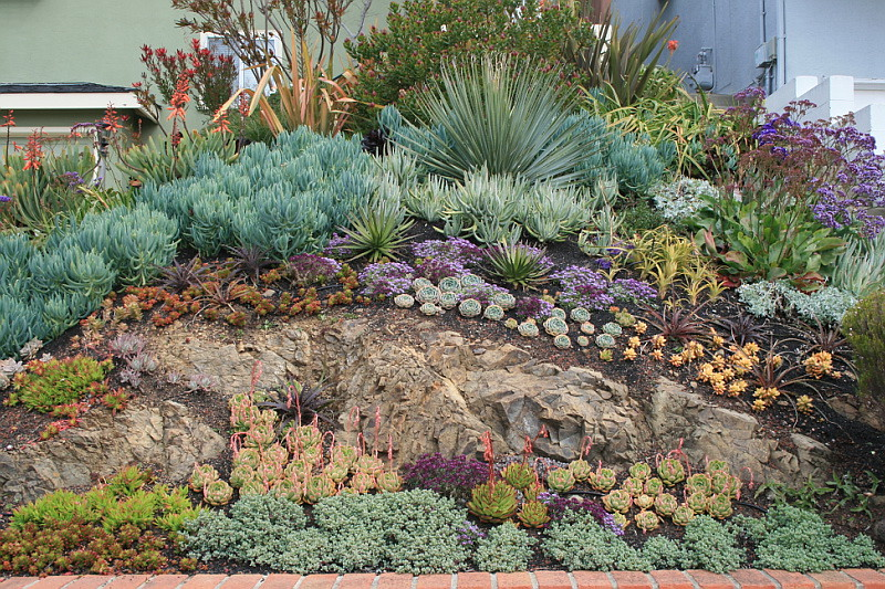 How to landscape a rock outcrop design by david for Garden design using succulents