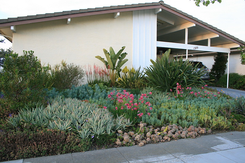 Panoramic view of domingo residence front garden an for Low water landscaping