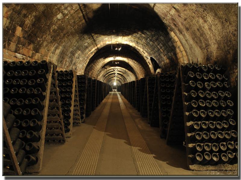 Cavas codorniu 30 1 2011 11 30 visita caves codorn u - Cavas de vinos para casa ...