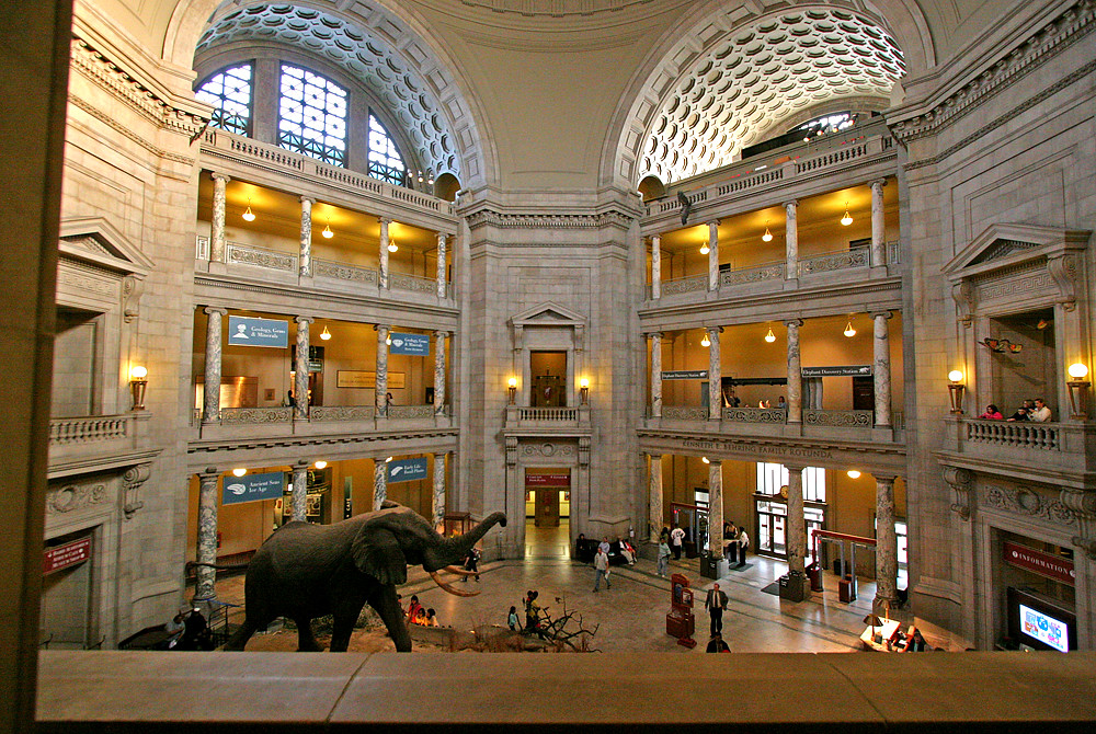 Museum Entry Foyer : Interior entrance foyer of the smithsonian natural history
