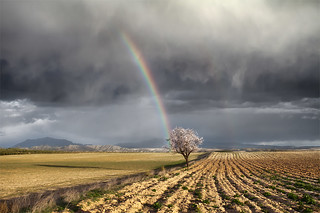 One Storm, Two Rainbows and Almond Tree | by DavidFrutos