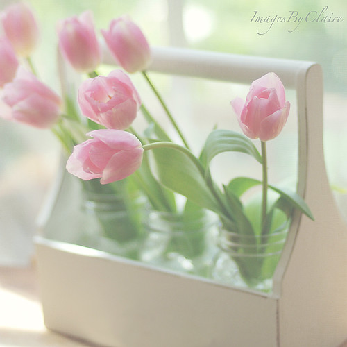 Jars of tulips | by ImagesByClaire