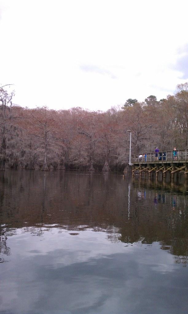 Caddo lake fishing pier from the canoe nicolas for Caddo lake fishing report