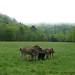 The Daily Donkey 40