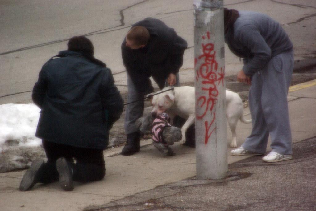 Pitbull Attacks Dog Walking By