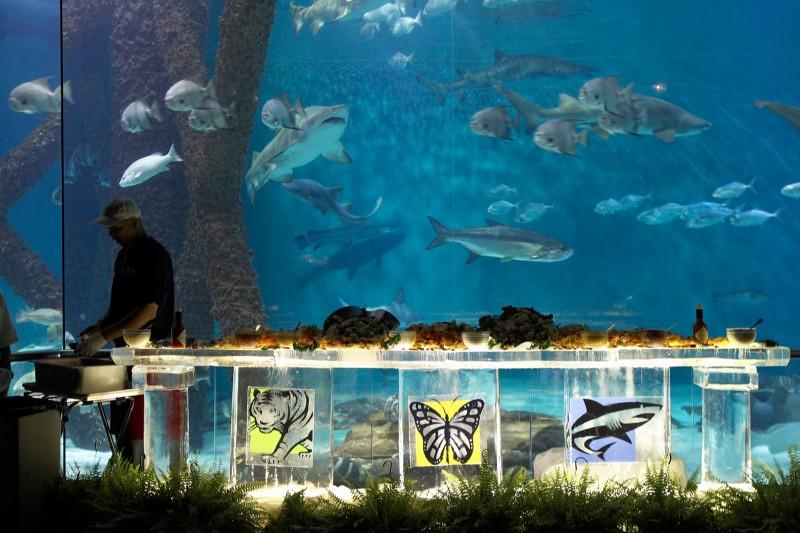 Audubon Aquarium Of The Americas Audubon Aquarium Of The