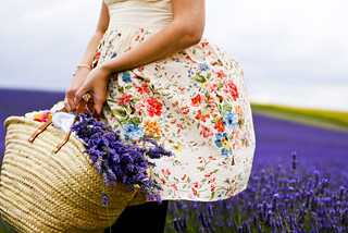 Tasmin in the lavender field | by buzzy boy