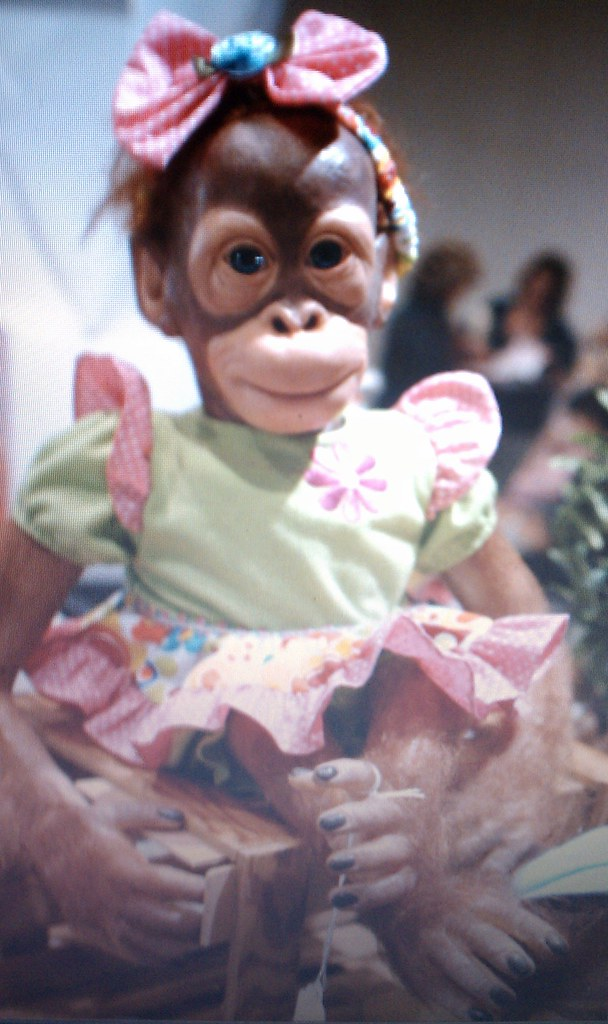 Baby Monkeys For Sale Shuga Shug Flickr