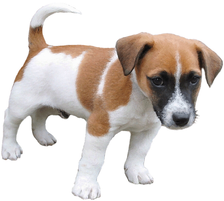 Jack Russell Dry Dog Food
