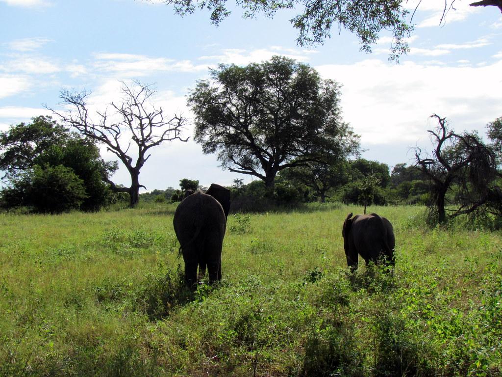 Cámara para Photo Safari - South Africa Foro