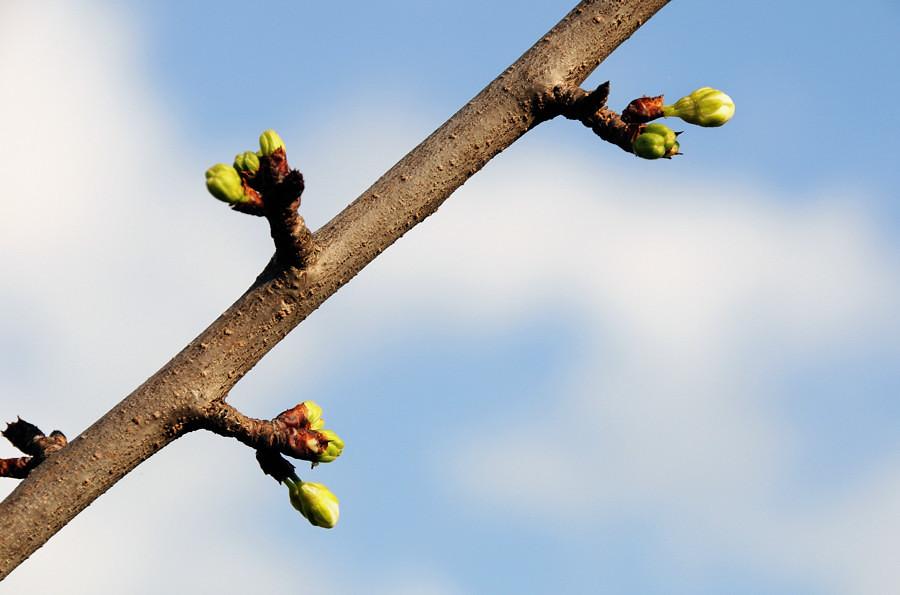 Sul tronco si rompono gemme ed ecco sul tronco si rompono flickr - Poesia specchio quasimodo ...