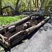 South End Earth Day 2011 - Albany, NY - 2011, Apr - 30.jpg