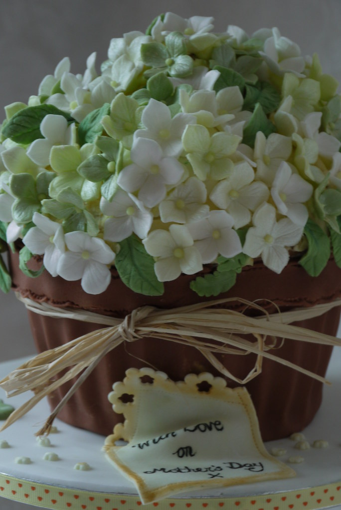 Giant Cupcake Hydrangea Blossom Plant Pot For Mother S Day