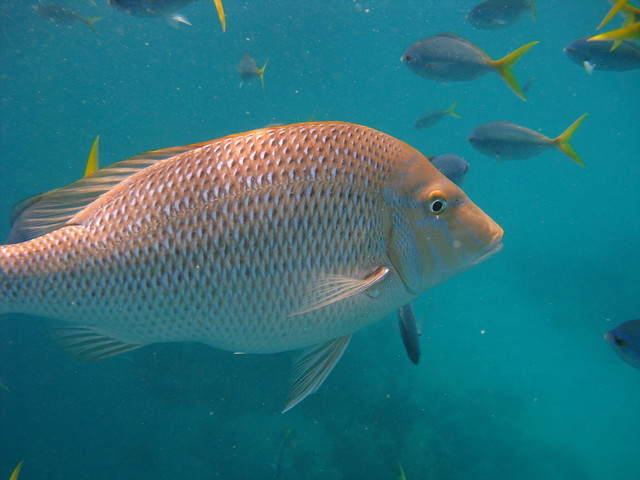Fish Great Barrier Reef Flickr Photo Sharing