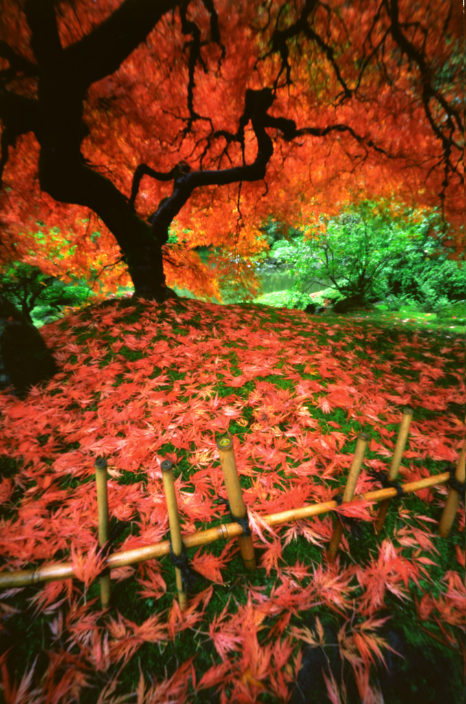 Benefit auction for japanese disaster relief 3 hours flickr - Portland japanese garden free day ...