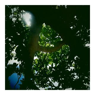 Siesta under a fig tree | ogomogo