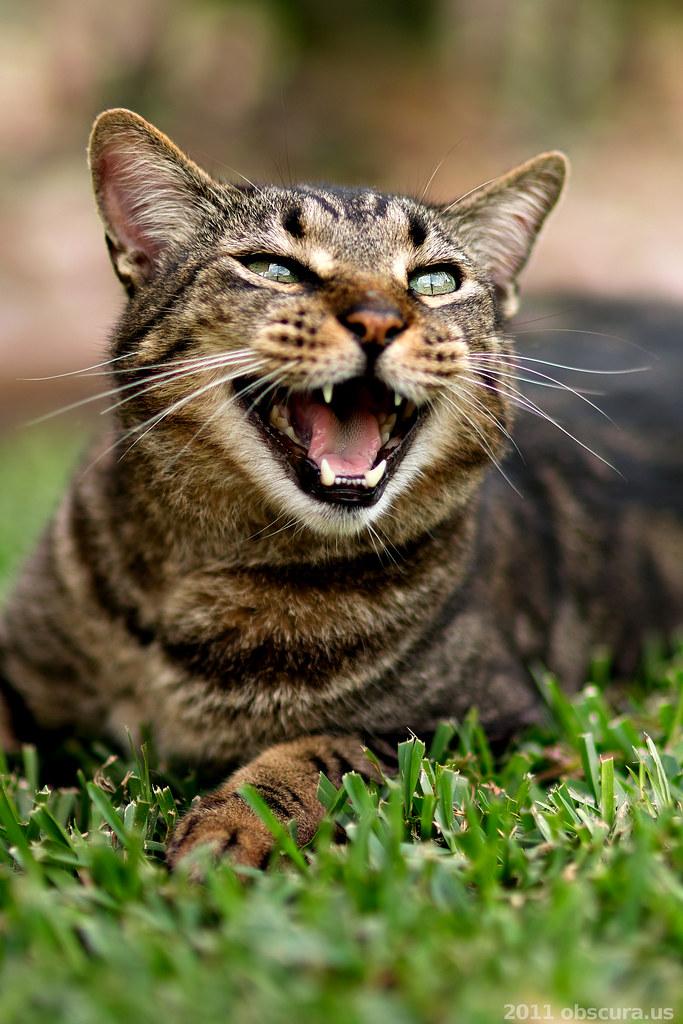 Meow Meow Cat Cafe Kuching