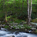 Sounds of Silence -- Great Smokies, TN