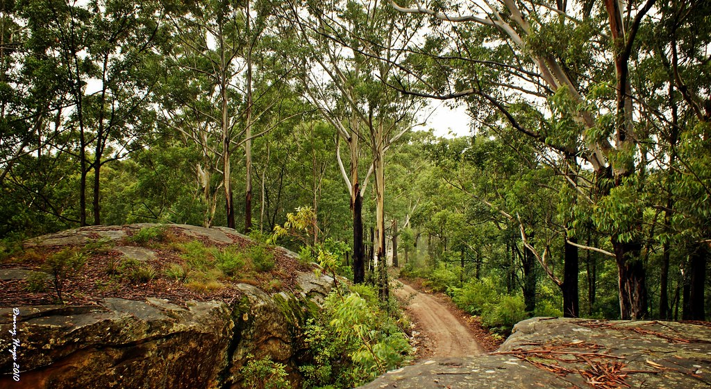 The Wet Forest Ourimbah State Forest Nsw Central Coast