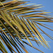 Hurghada Palm Tree Leaves