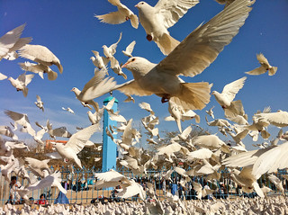 White Doves at the Blue Mosque | by LouBu