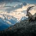 ^ Mount Nageli: Capricorn MkII ^