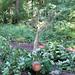 290611-pine-top