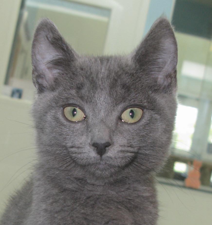 grey kitten wallpaper 294 - photo #15