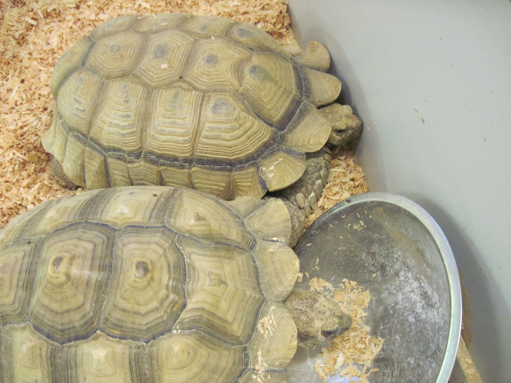 Image Result For Can Tortoises Live