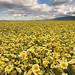 Field of Dreams - Carrizo Plain National Monument