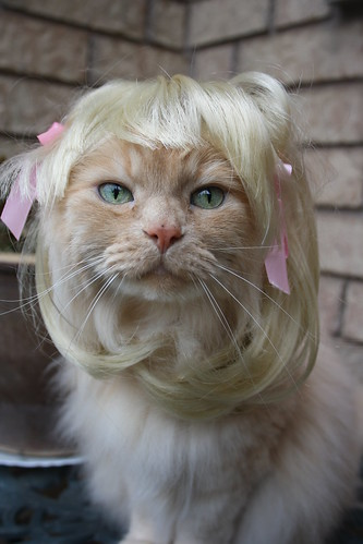 Blonde Cat Nude Photos 6