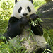 Yun Zi back on exhibit....