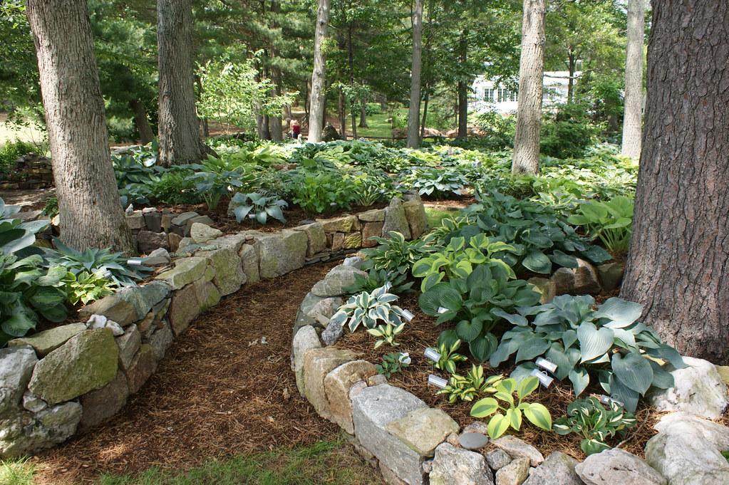 Hosta garden curved stone edging 2 karl gercens flickr