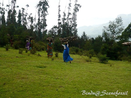 2. Women, forest, firewood, Kodaikanal | by binduroy22