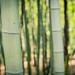 Bamboo - 竹