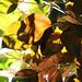 Folhas de outono / Autumn leaves