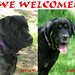 We Welcome Jersey & Lexi