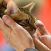 Love of the Feline 6