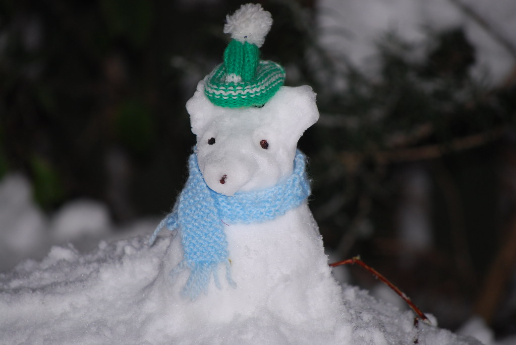 Image Result For Images Of Snow