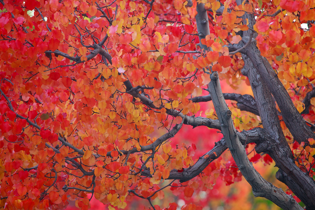 Fall Colors of San Jose [CAL-2012-31]   Looking around for f…   Flickr